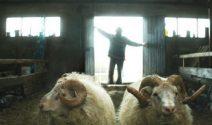 3 x 2 Tickets für den Film «Rams» gewinnen