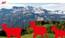 Familienferien in einer Schweizer Alphütte, Migros Geschenkkarten und mehr gewinnen