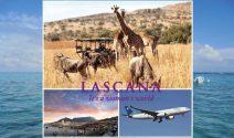 Südafrika Reise zu zweit inkl. Flüge gewinnen