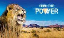 Namibia Safari für die ganze Familie und mehr gewinnen