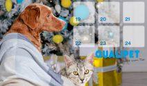 24 tolle Advents-Preise von Qualipet gewinnen