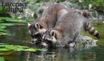 15 x Tierpark Goldau Familienticket gewinnen