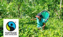 Eine Reise nach Reise nach Sri Lanka oder einen Coop Gutschein gewinnen