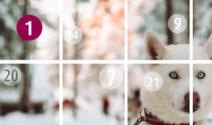 Reise nach Lappland mit Pixum Adventskalender gewinnen